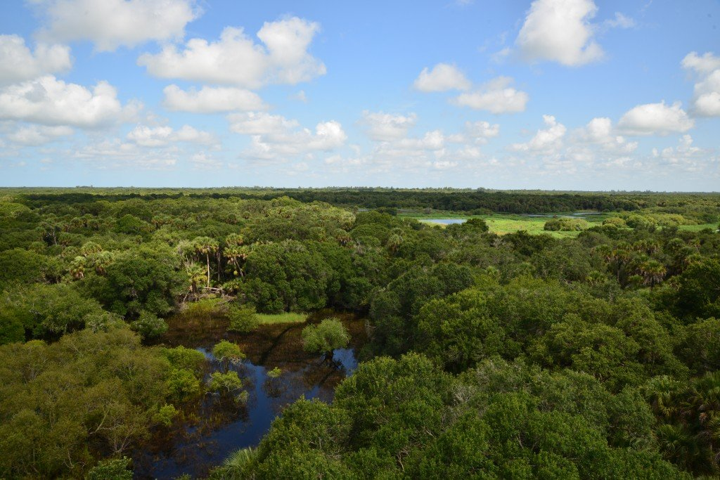view from myakka river state park viewing tower