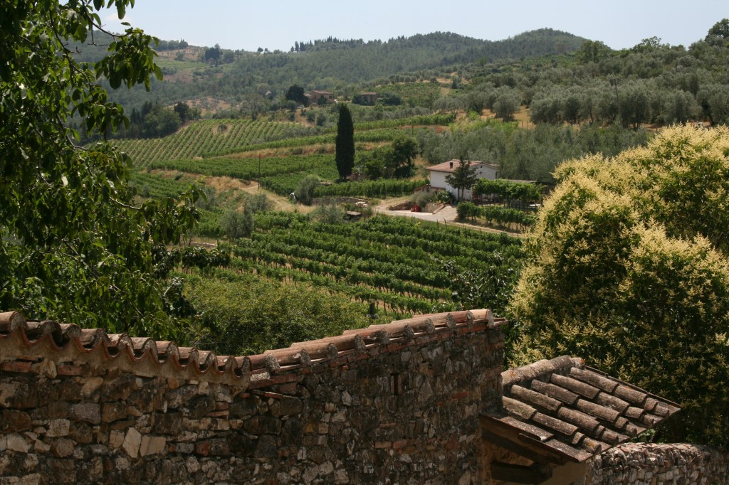 Tuscany Vineyard