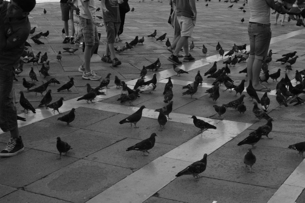 Pigeons in Saint Mark's Square Venice