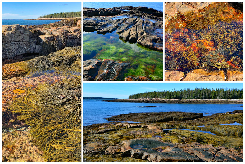 Tidepools in Acadia