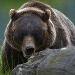 Anchorage Wildlife Conservation Center
