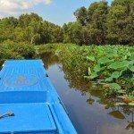 Experience Natural Beauty in the Mekong Delta