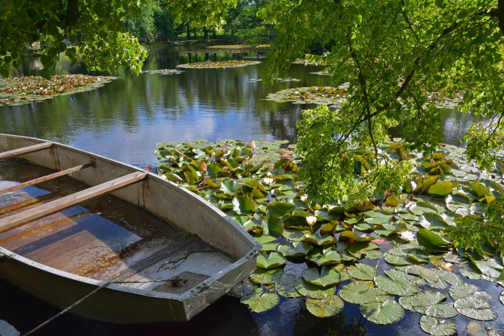 Rowboat and lily pads