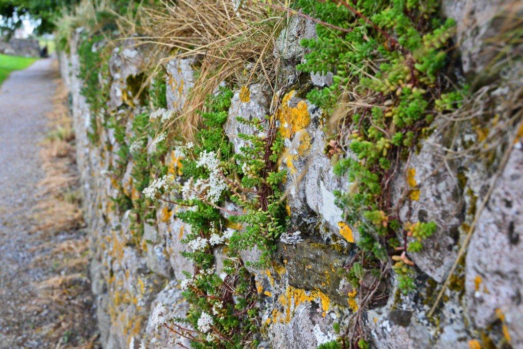 Stone Wall- Irish Countryside