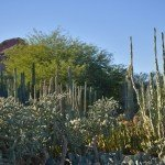 An Evening in the Desert Botanic Garden (Phoenix, Arizona)