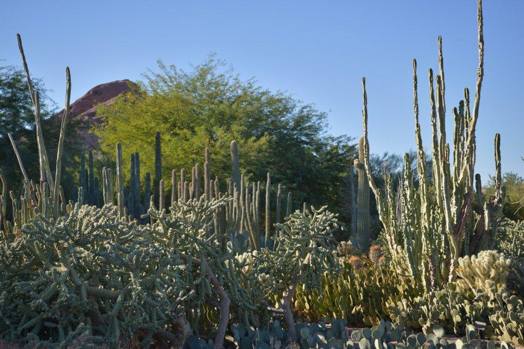 An Evening In The Desert Botanic Garden Phoenix Az