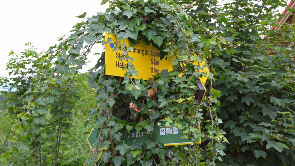 Austria Hike Path Sign covered in vines