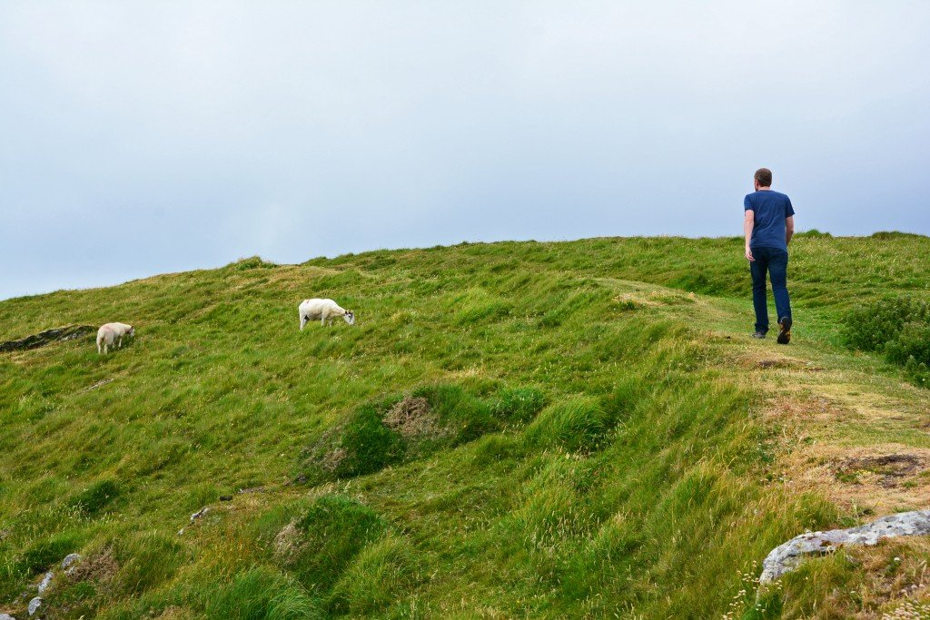 Man walking on grassy field with sheep