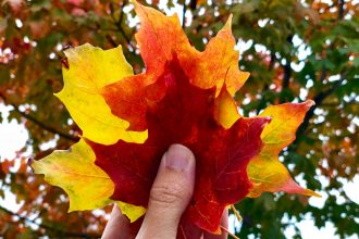 New Hampshire Foliage – Experience Fall in the White Mountains