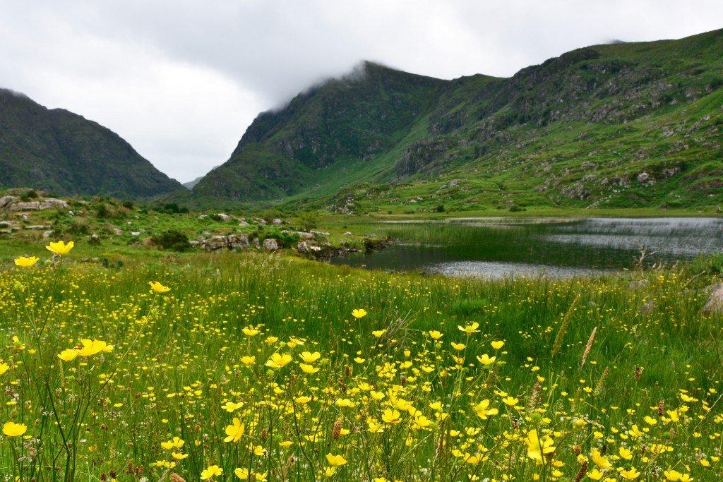 Flower field Gap of Dunloe