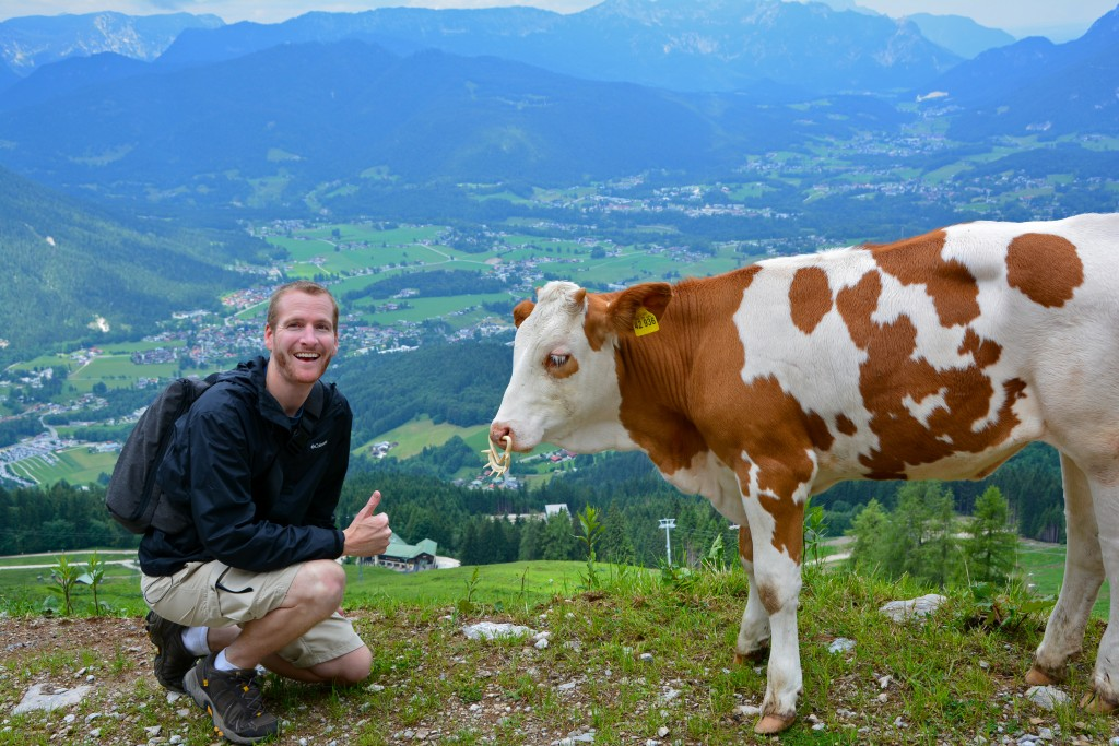 Cow Berchtesgaden National Park Germany