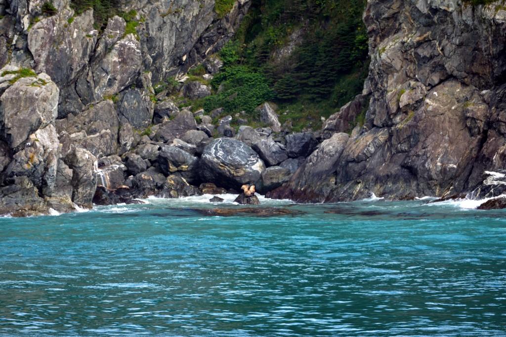 Glacier Bay (195)