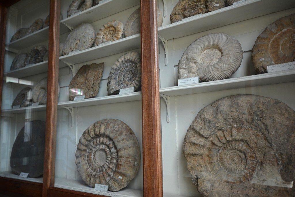 Fossils Teylers Museum Haarlem Netherlands