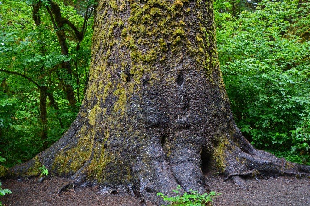 Hoh Rain Forest (14)