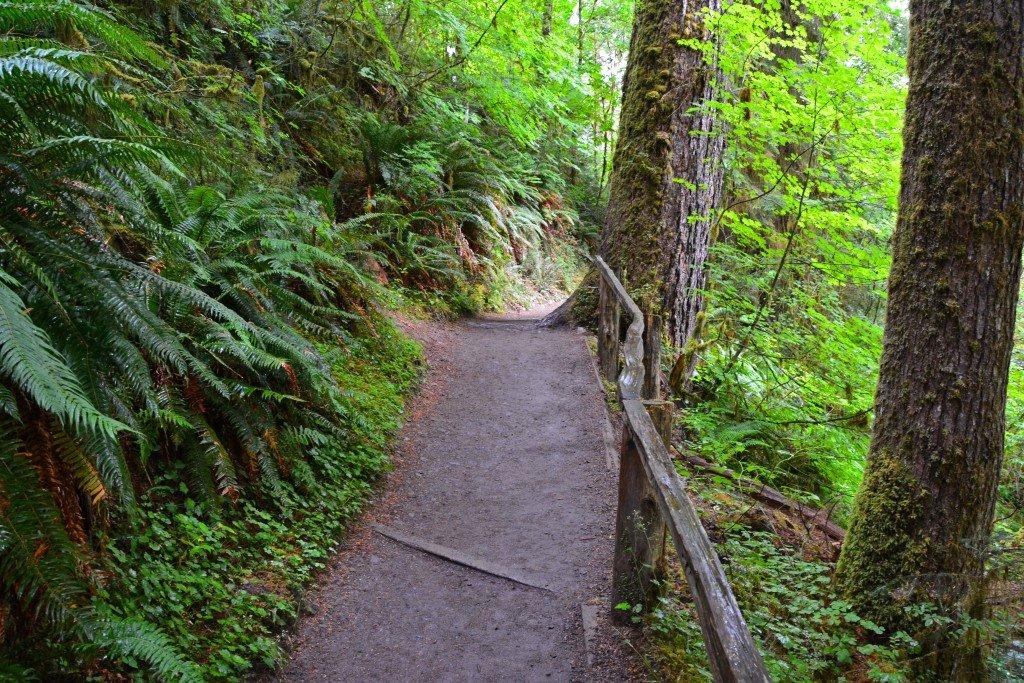 Hoh Rain Forest (21)