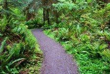 Hoh Rain Forest (54)