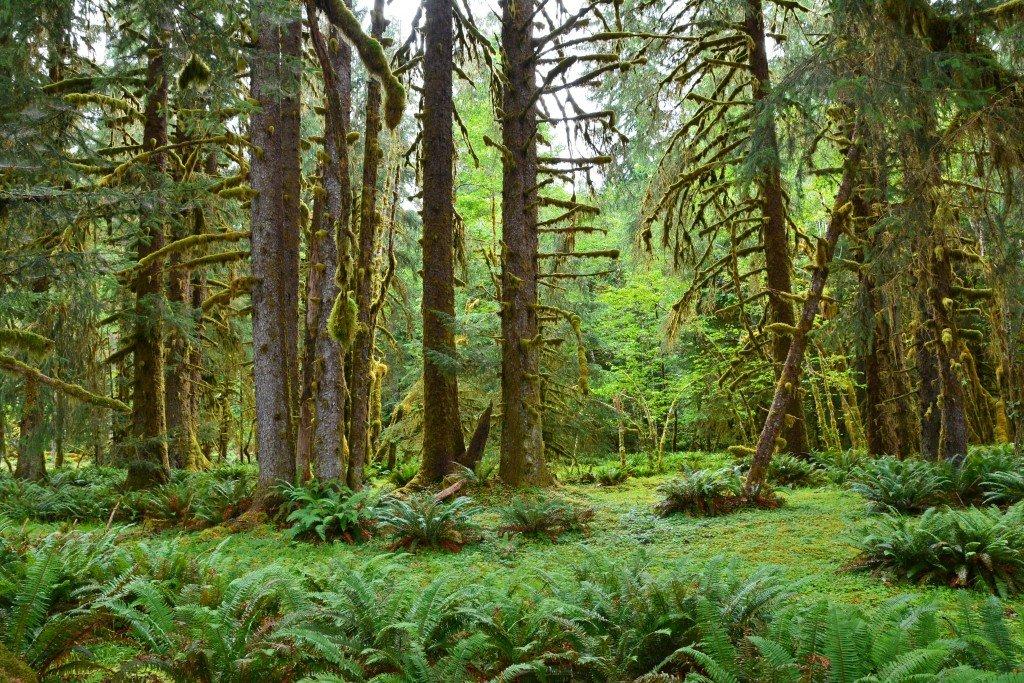 Hoh Rain Forest (59)