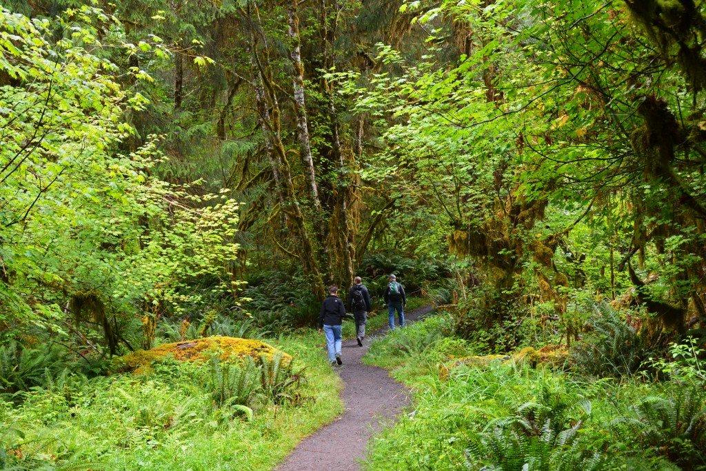 Hoh Rain Forest (72)