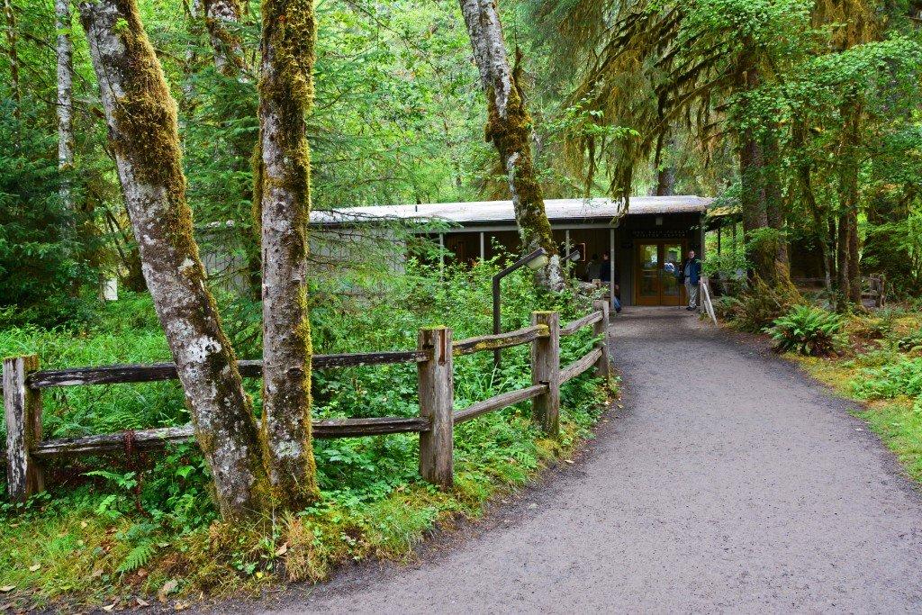 Hoh Rain Forest (78)