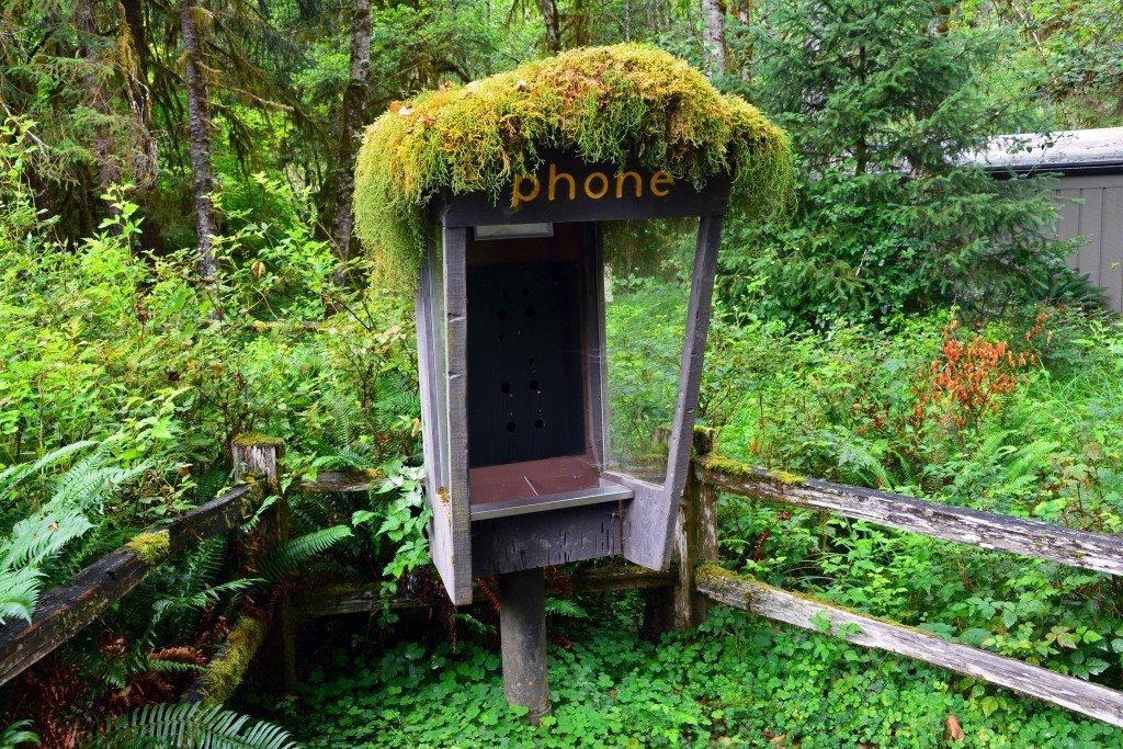 Hoh Rain Forest (79)