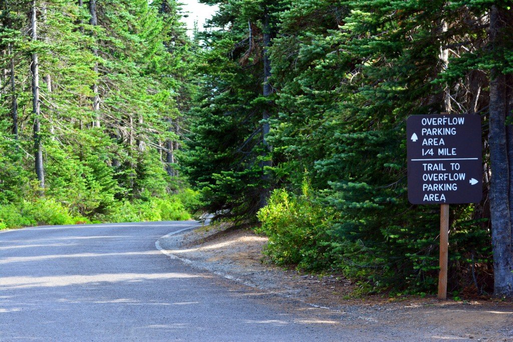 Hurricane Ridge (109)