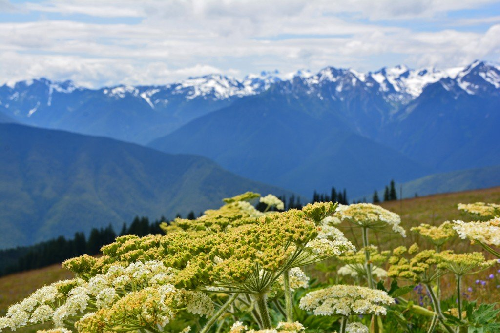 Hurricane Ridge (20)