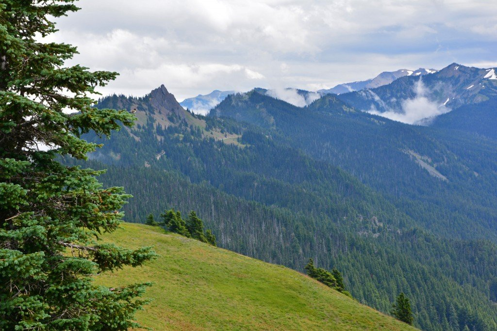 Hurricane Ridge (21)