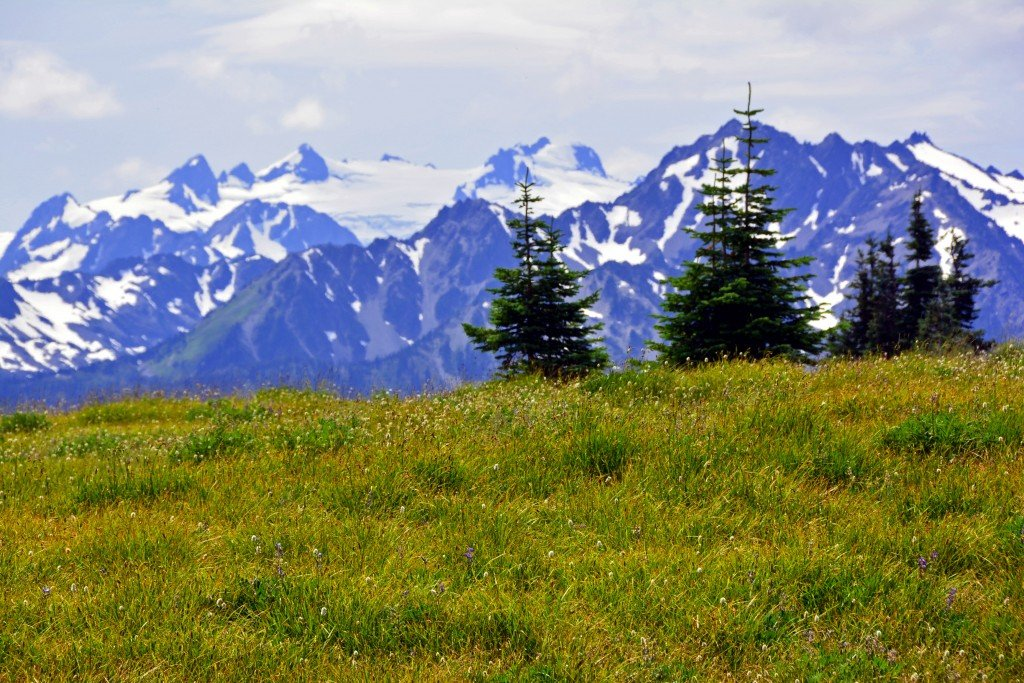 Hurricane Ridge (37)