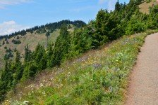 Hurricane Ridge (40)