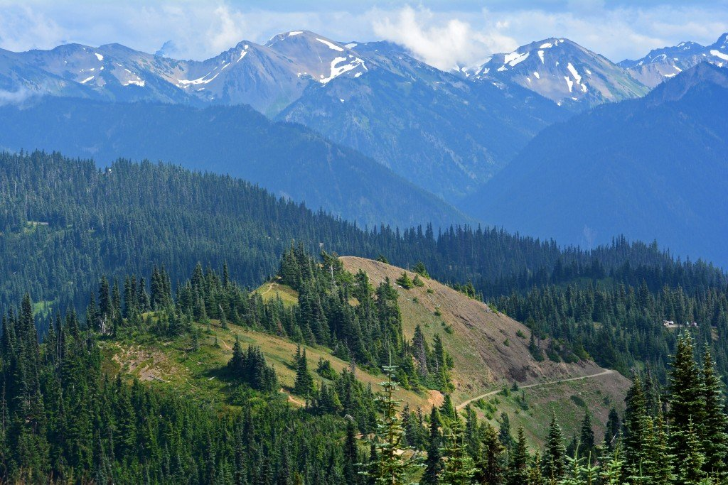Hurricane Hill Olympic National Park