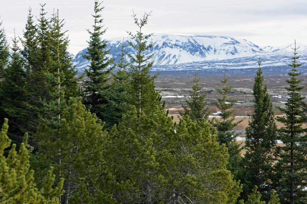 Iceland Mar14 (325)