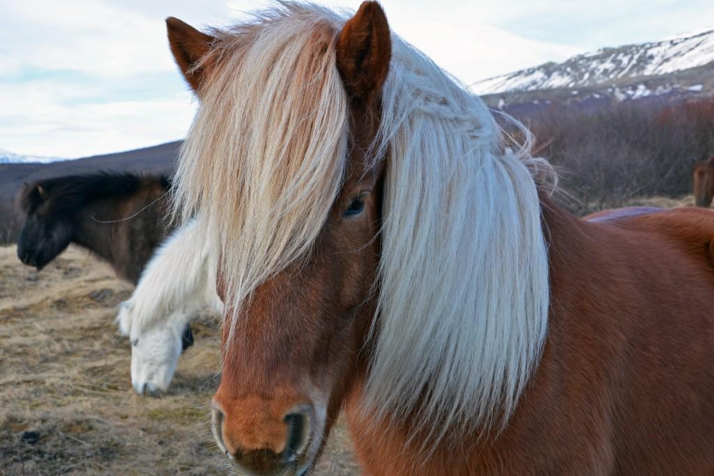 Iceland Mar14 (342)