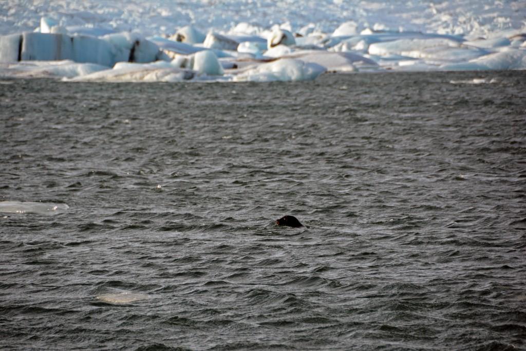 Iceland Mar14 (739)