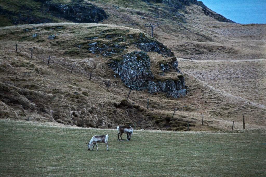 Iceland Mar14 (778)