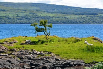 3 Reasons to Visit Isle of Mull in Scotland