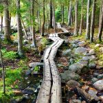 Acadia National Park Hiking – Best Easy Hikes in Acadia