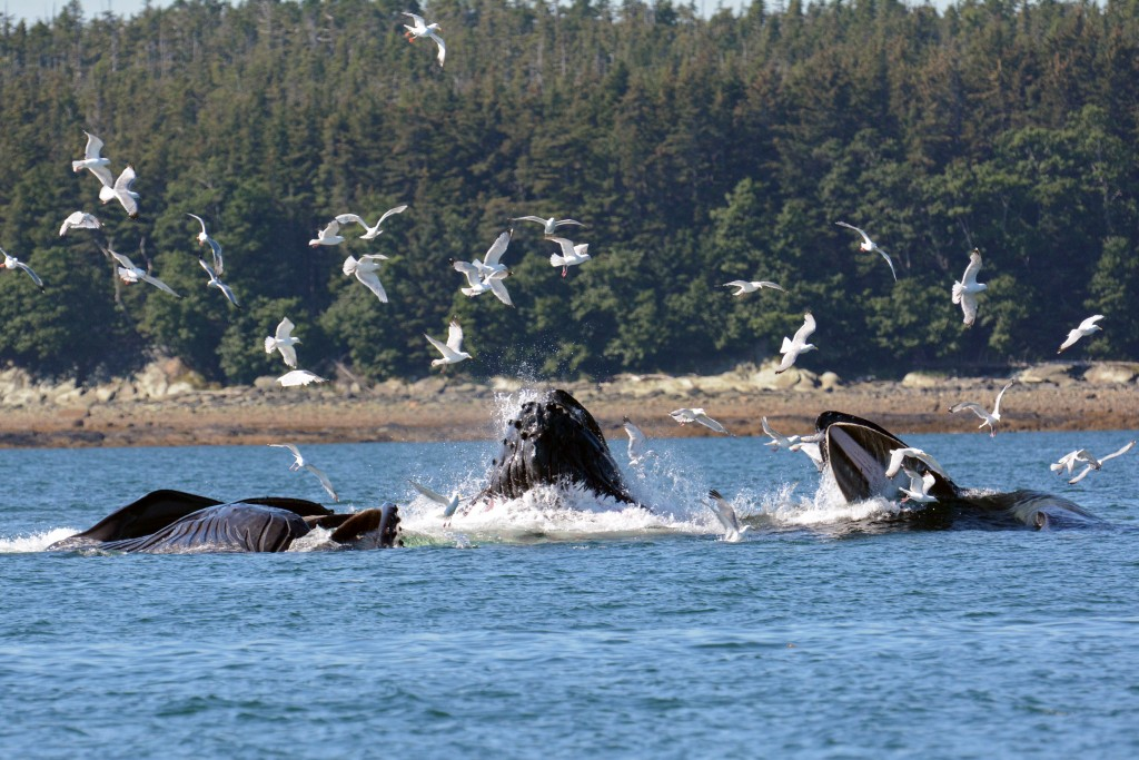 Image result for Understanding the Passenger Experience in Juneau whale watch