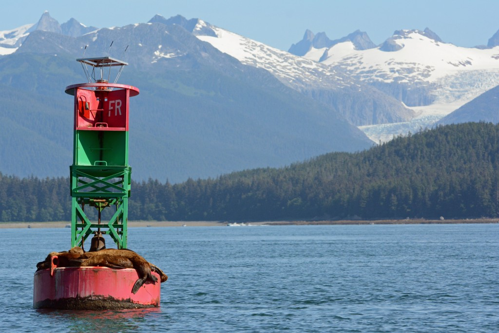 Seals in Juneau