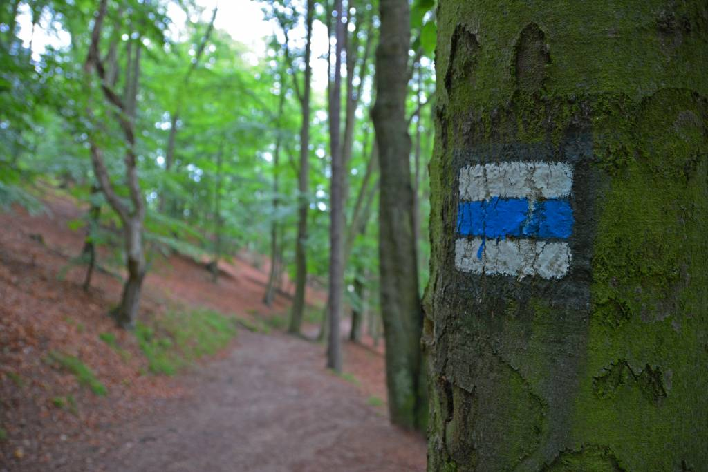 Trail Marker on tree