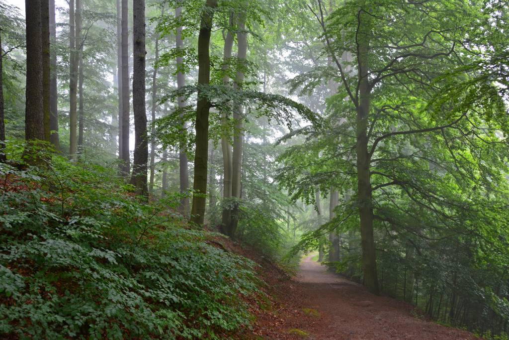 Misty forest walk