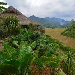 Discover Tranquility & Tradition at the Mai Chau EcoLodge