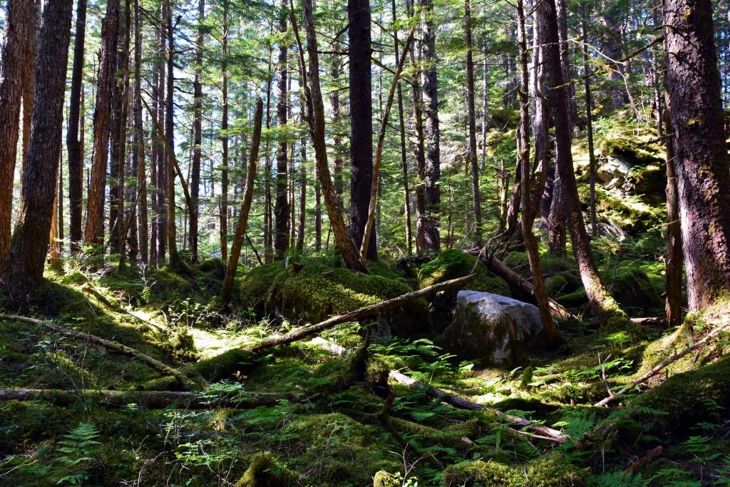 East Glacier Trail Hike
