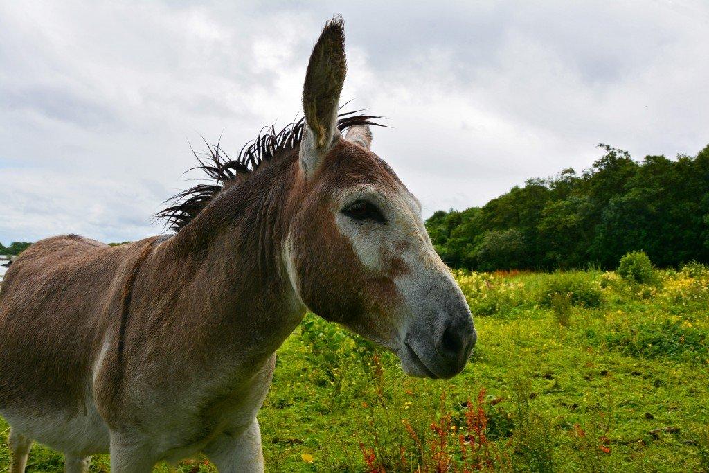 Field donkey