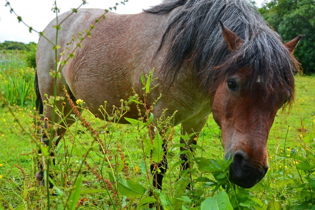 Ireland horse in a field