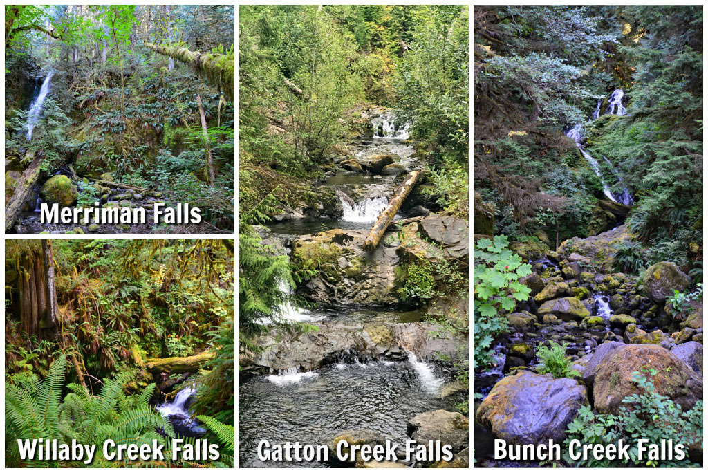 Quinault Waterfalls