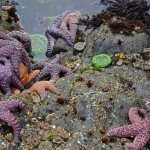 Incredible Tidepools at Rialto Beach
