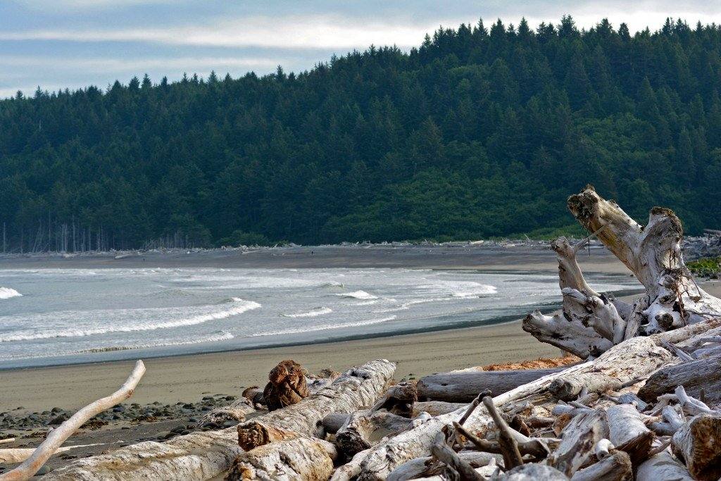 Drift wood Rialto Beach Olympic Peninsula Washington