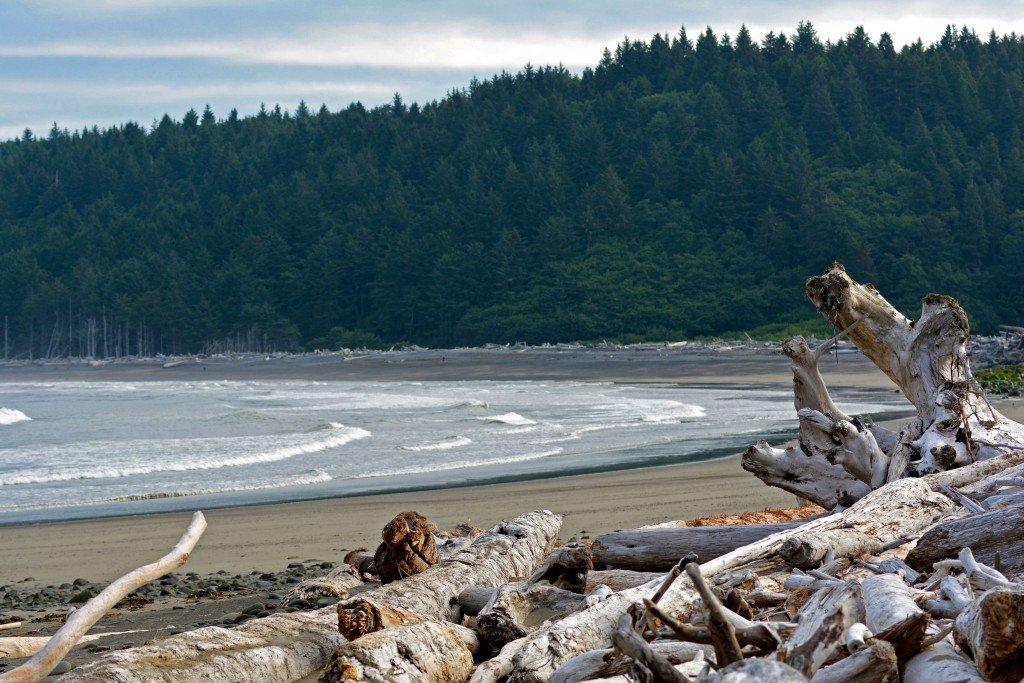 Drift wood Rialto Beach Olympic Peninsula Washington