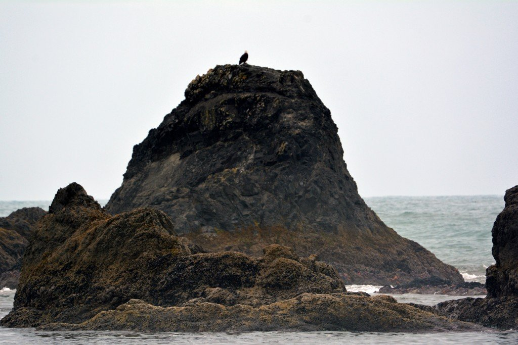 Bald eagle perched on ocean rock
