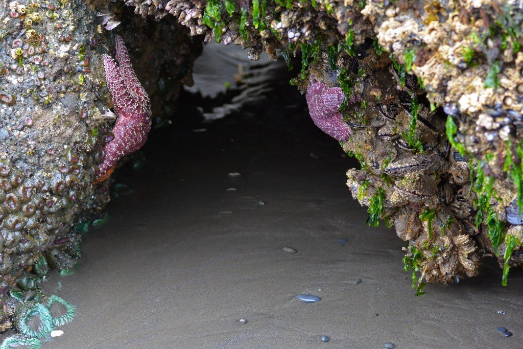 Mussels and purple starfish